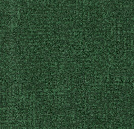 s246022/t546022 evergreen