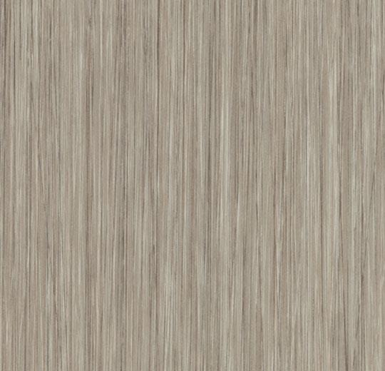 w61253 oyster seagrass