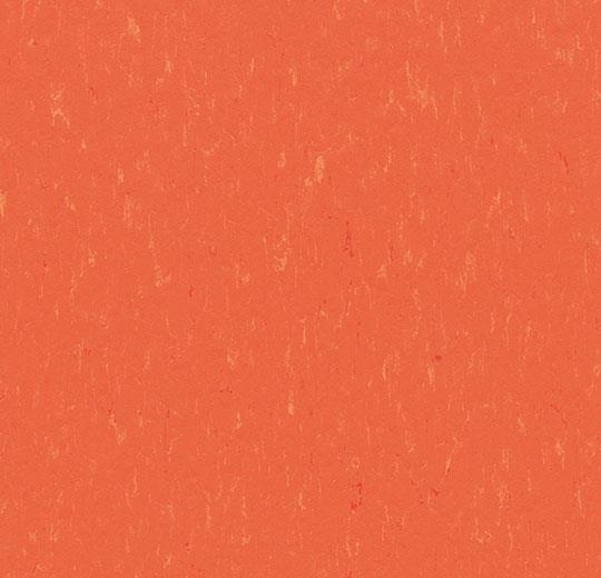 3651/365135 zinnia